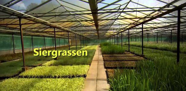 Plantenkwekerij Jo Raemen